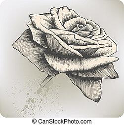 weinlese, vektor, rose, hand-drawing.