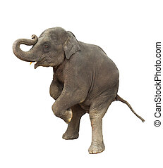 weisen, junger, asia, kind, elefant, front, beine, spielende...