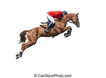 weisen, pferd, freigestellt, bucht, springende , hintergrund, weißes, reiter