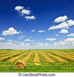 weit landgoed, akker, op, oogsten