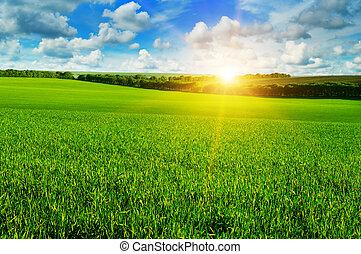 weit veld, en, zonopkomst, in, de, blauwe hemel
