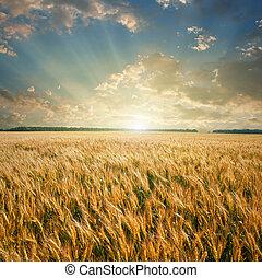 weit veld, op, ondergaande zon