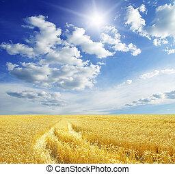 weizen- feld, blau, himmelsgewölbe, mit, sonne