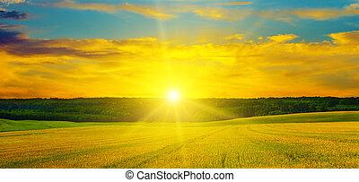 weizen- feld, und, a, köstlich, sunrise., breit, photo.