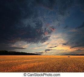 weizen- feld, wolkenhimmel, sonnenuntergang