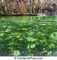 Wekiwa Springs in Florida - Clear waters of Wekiwa Springs...
