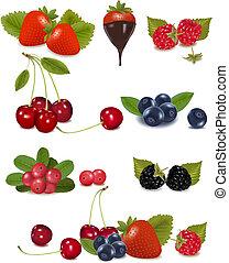 wektor, świeży, cielna, grupa, jagody