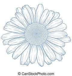 wektor, daisy.