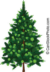 wektor, drzewo jodły
