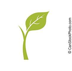 wektor, icon., roślina, natura, ekologia, graficzny, zielony liść
