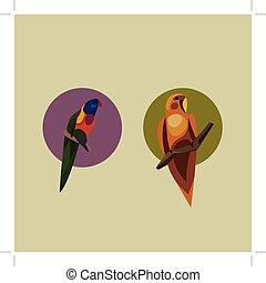 wektor, ilustracja, papuga