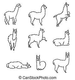 wektor, komplet, od, characters., ilustracja, od, południe, amery, sprytny, lama, z, decorations., odizolowany, szkic, rysunek, niemowlę, llama., ręka, pociągnięty, peru, zwierzę, guanaco, alpaka, vicuna., rysunek, dla, druk, fabric.