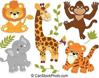 wektor, komplet, od, dżungla, zwierzęta