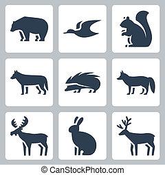 wektor, komplet, zwierzęta, las, ikony