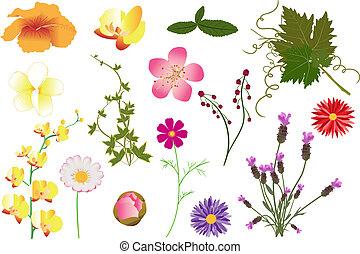 wektor, liście, kwiaty