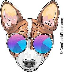 wektor, pies, hipster, poważny, okulary, pies gończy