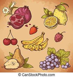 wektor, rytownictwo, słodki, owoce