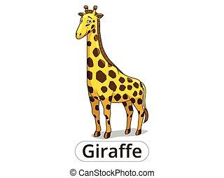 wektor, savannah, żyrafa, zwierzę, afrykanin, rysunek