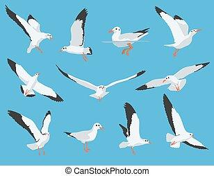 wektor, seagull, komplet, ptak, morze