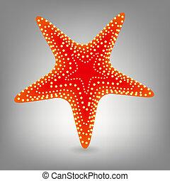 wektor, starfishe, ilustracja, ikona