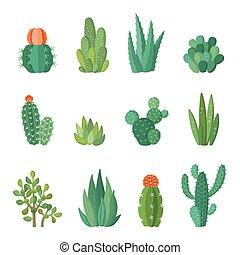 wektor, succulents, komplet, kaktus, rysunek