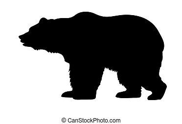 wektor, sylwetka, niedźwiedź
