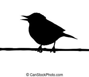 wektor, sylwetka, od, przedimek określony przed rzeczownikami, ptak, na, gałąź