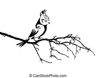 wektor, sylwetka, ptak, gałąź