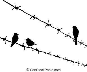 wektor, sylwetka, trzy, ptaszki, na, drut kolczasty