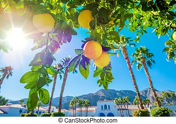 Welcome in California. Sunny California Landscape, Palms and...