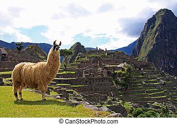 Llama welcomes visitors to Machu Picchu in Peru.