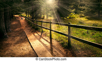Dreamy enchanting path in the forest with a bench in the distance and welcoming beams of light shining