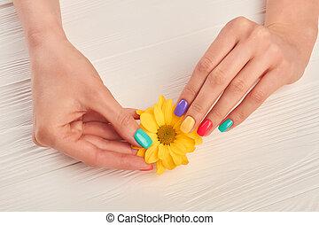 Well-groomed hands holding yellow chrysanthemum. Little...