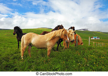 Well-groomed horses graze and play with each other in a...