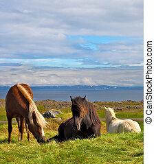 Well-groomed horses grazing in a meadow near the farm. Farm...