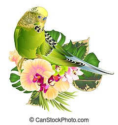 wellensittich, tropische , phalaenopsis, orchidee, vector....