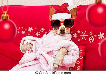 wellness, ホリデー, クリスマス, エステ, 犬