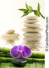 wellness, 環境, 竹, 蘭, マッサージ, 石