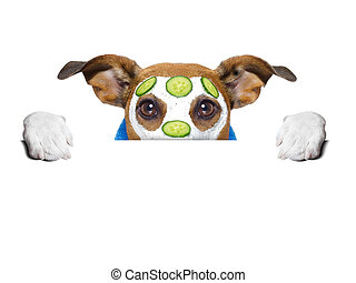 wellness dog behind banner with a cucumber mask