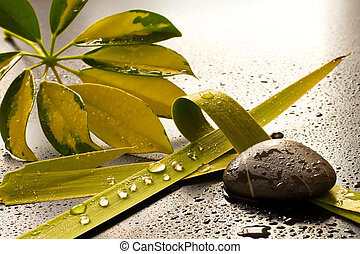 Welness - Green leaves and stones, drops of water in a dark ...