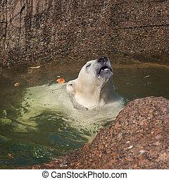 welp, polar bear