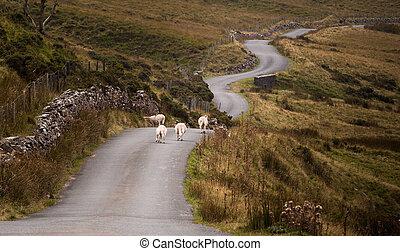 Welsh mountain road