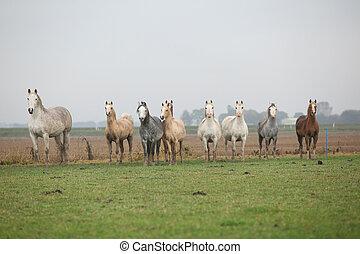 Welsh ponies in autumn - Welsh ponies in bad weather in...