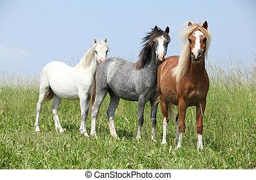Three curious ponies