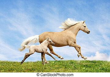 welsh, pony, merrie, en, foal