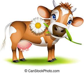 wenig, essende, jersey kuh, gänseblumen