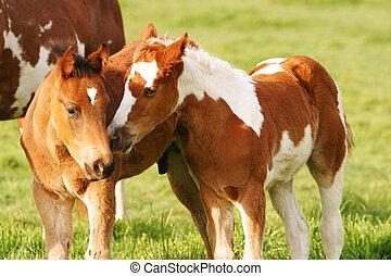 wenig, friends, pferd