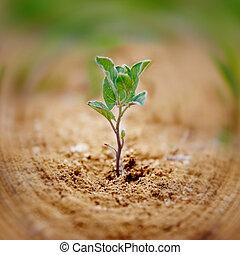 wenig, grün, Pflanze