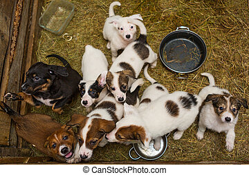 wenig, hundebabys, schutz