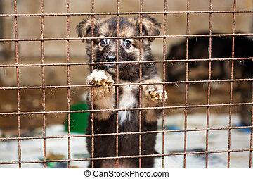 wenig, junger hund, in, a, käfig, von, a, unterstand